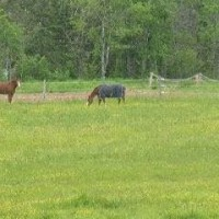30 ACRE HORSE PROPERTY NOVA SCOTIA (HANTS COUNTY)
