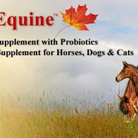 Bioequine Horse Supplement