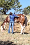 6 Year Old Quarter Horse Gelding