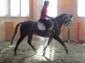 Holsteiner mare for sale