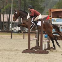 Gorgeous 6 yr old Bay Thoroughbred Gelding