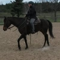 FREE- LEASE this 7-year old registered  Quarter Horse