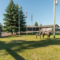 Fabulous 20 Acre Residential Acreage Near Red Deer
