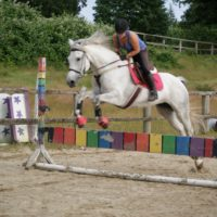 Stunning Registered Canadian Warmblood Mare for sale!