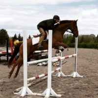 10 y/o chestnut thoroughbred gelding for sale *kizmet*