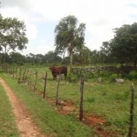 Cattle Ranch & Property to enjoy in Yucatan, Mexico.