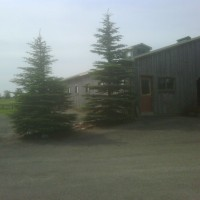 12 Stall Horse Barn Facility for Lease in Hillsburgh
