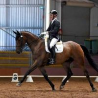Competition Dressage Horse