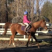 Amazing kids horse for sale