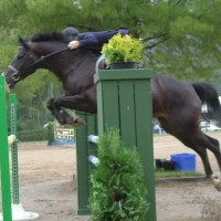 Successful Hunter/Jumpers for Paid Show Lease