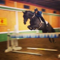 Warmblood Gelding for Partboard