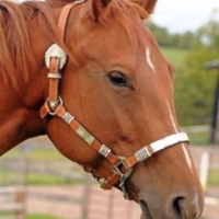 Awesome Quarter Horse For Part Board, Registered AQHA