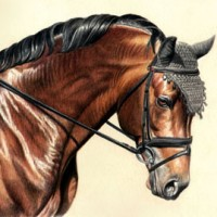 Beautiful Horse Portraits by artist Janet Griffins-Scott