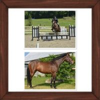 Talented 2010 RPSI 16,1hh mare