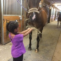 20 Stall Barn for Rent in Ajax Ontario