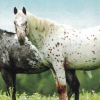 150 Acre Appaloosa Horse Breeding Centre Northern BC