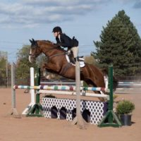 10a9466e79a Browse Horses for Sale and other Ads – Horse Canada