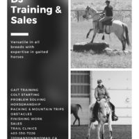 DJ Training And Sales - Colt Starting, Problem Solving