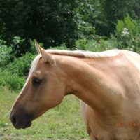 Broodmare For Sale