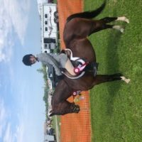 Athletic Large Pony For Sale