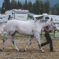 Outstanding AQHA youth or amateur mount for sale