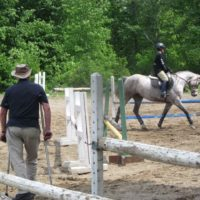 Dressage, hunt, event mount