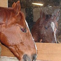 Horse/Stable mirror