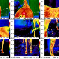 Online Animal/Equine Thermal Imaging Course