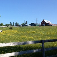 Affordable established Riding Stable with indoor minutes from university and Fredericton city centre
