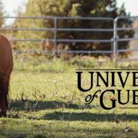 Equine Behaviour Clinic - University of Guelph