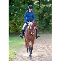 Bomb Proof Eventing horse, 10 year old, TB Gelding