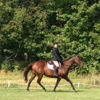 Horse available for full/part lease