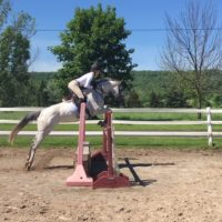 Bold, Brave & Fun Eventer/Jumper
