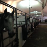 Odysseo/Cavalia farrier, trainer, stable hands, grooms