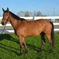 2008 RPSI mare out of Daimler D'Adriers and Feueropal