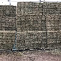 Bale Baron Bundles and Large Squares