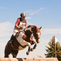 Myrddin Equestrian Centre is accepting boarders