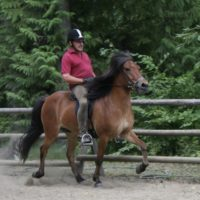 Experienced Icelandic Horse Trainer needed by Tolt Awa