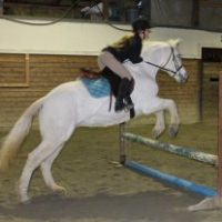 Great Horse for Half Lease $160.00 per Month