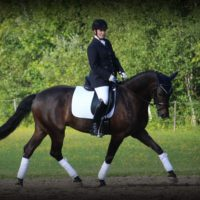 Show Pro - FEI Junior or Young Rider Horse