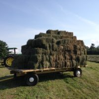 Second Cut Square bales for sale