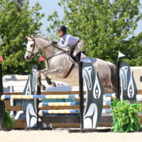 Jumper-dressage or eventing