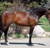 Canadian Stallions available for 2016 breeding program