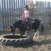 Seasoned Pony Mare - Incredibly Quite and Trustworthy
