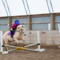 Medium Pony Gelding for Sale or Lease