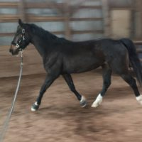 Great Athletic KWPM Mare
