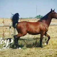 Exceptionally well bred yearling stud; warmblood!