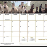 ULTIMATE Horse Savvy Wall Calendar 2019 & Horse Health