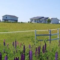 Beautiful Horse Farm overlooking Malpeque Bay PEI
