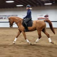 Dressage Gelding 3rd Level Priced to Sell